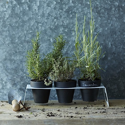 West Elm Chalkboard Planter Set with Holder