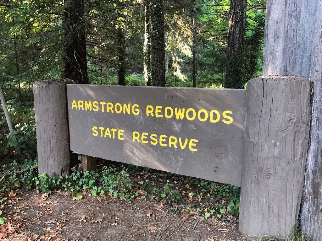 San Francisco and Wine Country Trip -- Armstrong Redwoods State Reserve | wearenotmartha.com