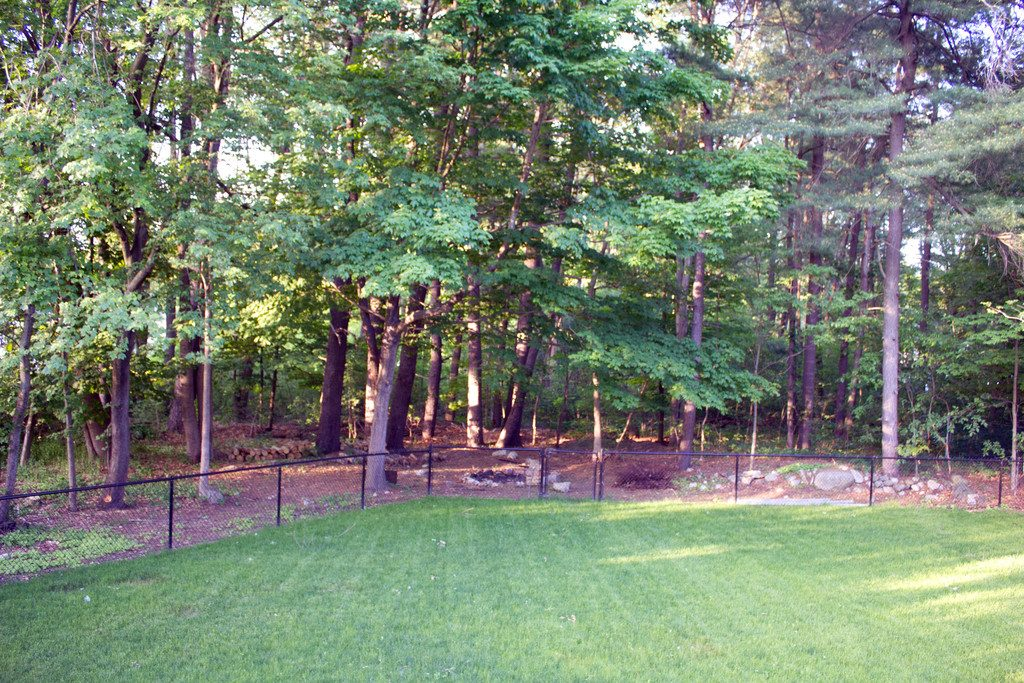 View of our backyard with green grass and lots of treest