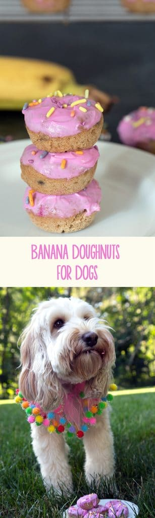 Banana Doughnuts for Dogs -- Doughnuts are the most delicious dessert, but why shouldn't your dog have any of the fun? | wearenotmartha.com