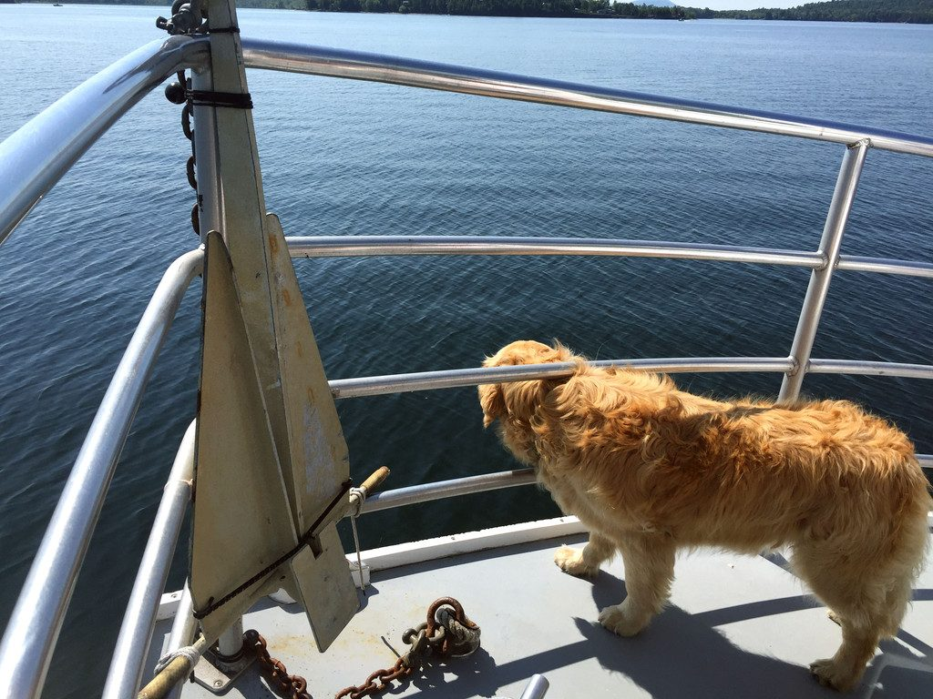 Basin-Harbor-Club-Boating-with-Dogs-2