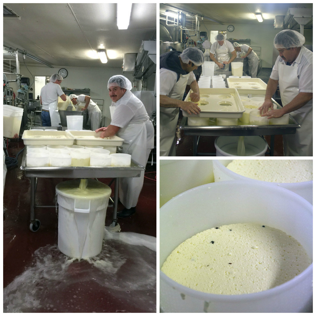 Cheesemaking at Bellwether Farms in Sonoma | wearenotmartha.com