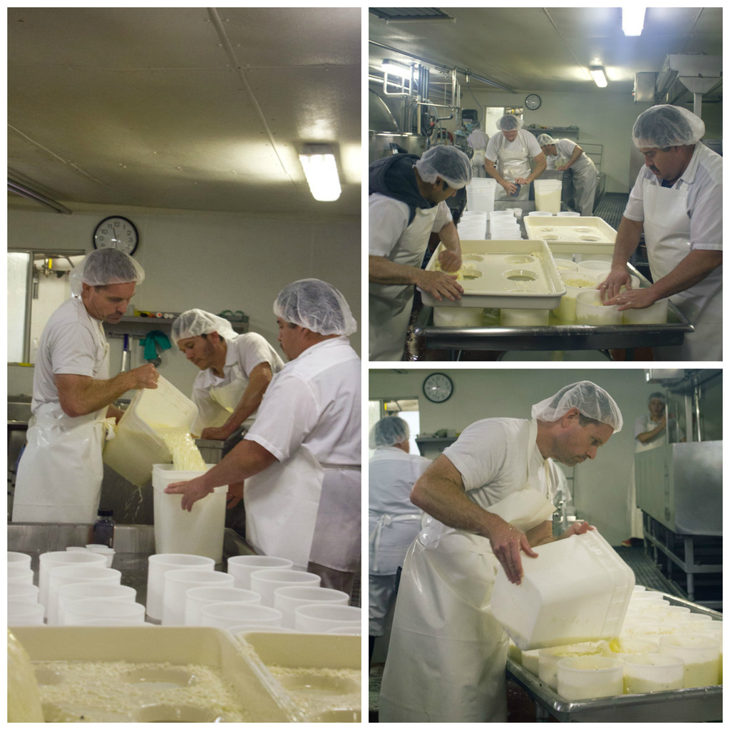 Cheesemaking at Bellwether Farms in Sonoma   wearenotmartha.com