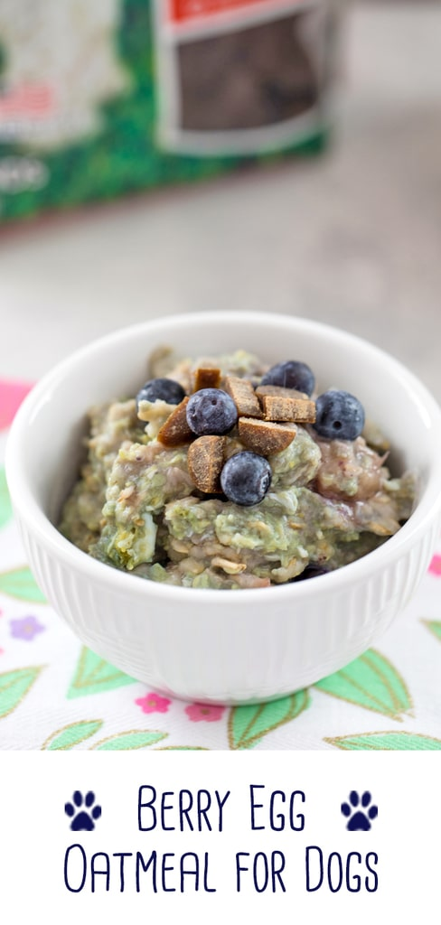 Berry Egg Oatmeal for Dogs -- a fiber and protein-packed breakfast, this Berry Egg Oatmeal for Dogs is made with love and topped with treats for an extra special meal for your furry friend! | wearenotmartha.com #oatmeal #recipesfordogs #dogfriendlyrecipes #breakfast #dogs