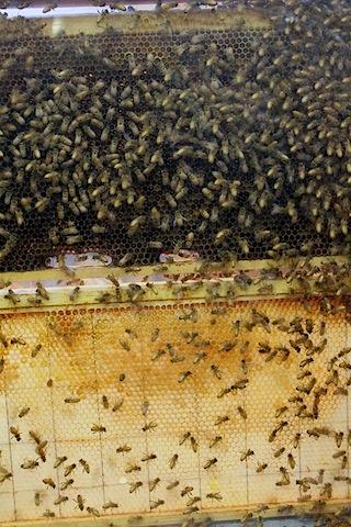 Big-E-Bees.jpg