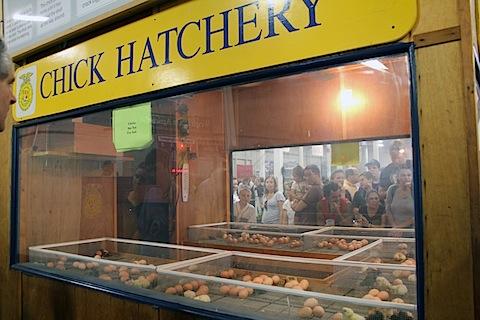 Big-E-Chick-Hatchery.jpg