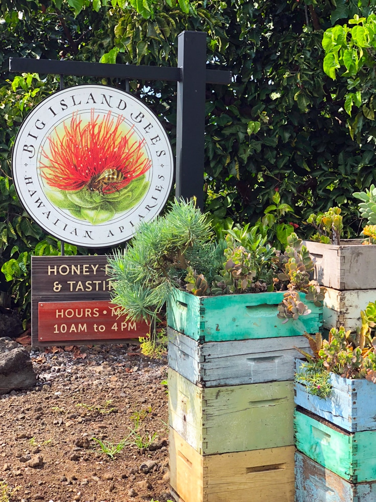Entrance to Big Island Bees in Kona on the Big Island of Hawaii with a sign and planters with succulents