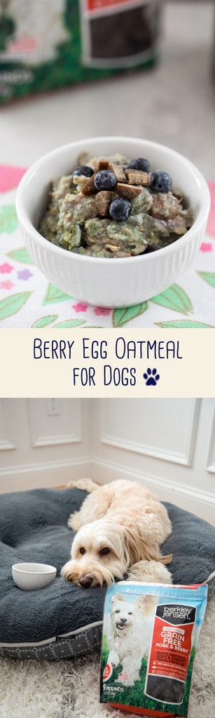 Berry Egg Oatmeal for Dogs -- a fiber and protein-packed breakfast made with love and topped with treats for an extra special meal for your furry friend! | wearenotmartha.com