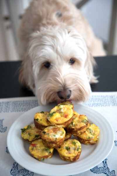 Chicken Sausage Kale Quiche for Dogs -- This dog-friendly recipe features mini crustless quiche   wearenotmartha.com