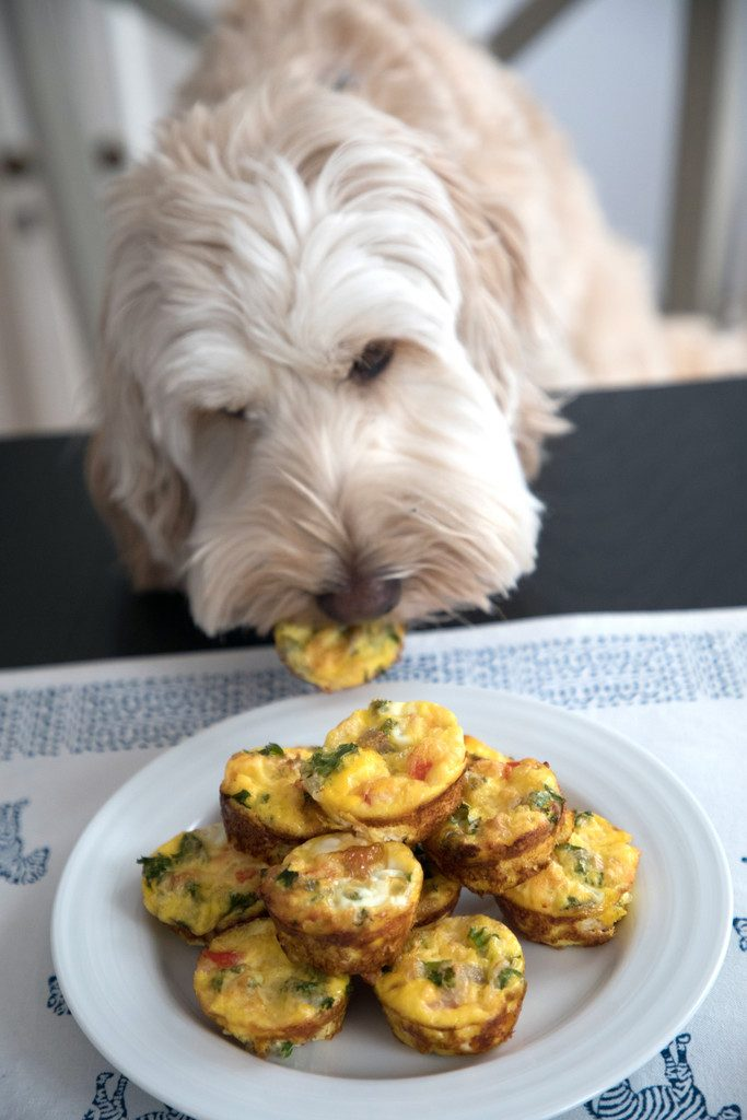 Chicken Sausage Kale Quiche for Dogs -- This dog-friendly recipe features mini crustless quiche | wearenotmartha.com