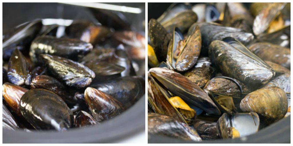 Collage with one photo showing mussels just added to broth and another photo showing mussels cooked in broth and opened up