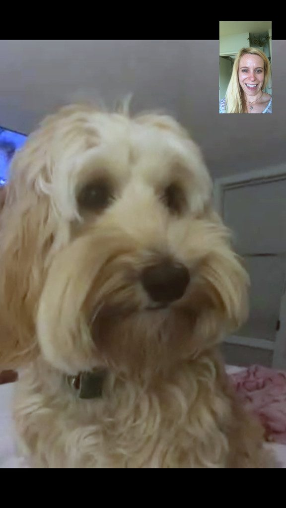 Facetiming with Winnie Labradoodle | wearenotmartha.com