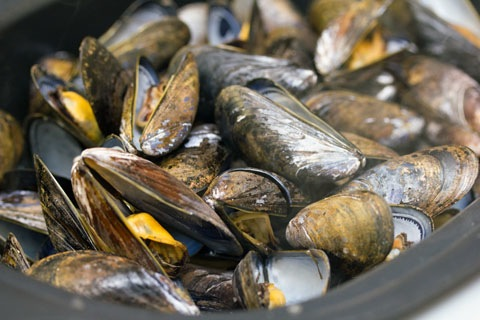 Fennel Mussels Steamed.jpg