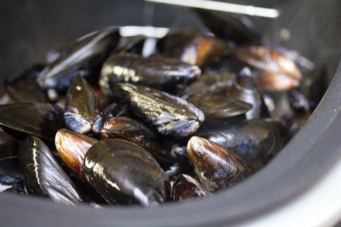 Fennel Mussels Steaming.jpg