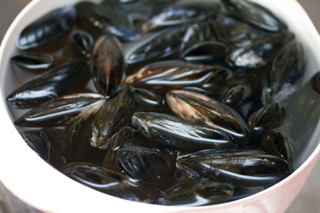 Overhead view of cleaned mussels sitting in water