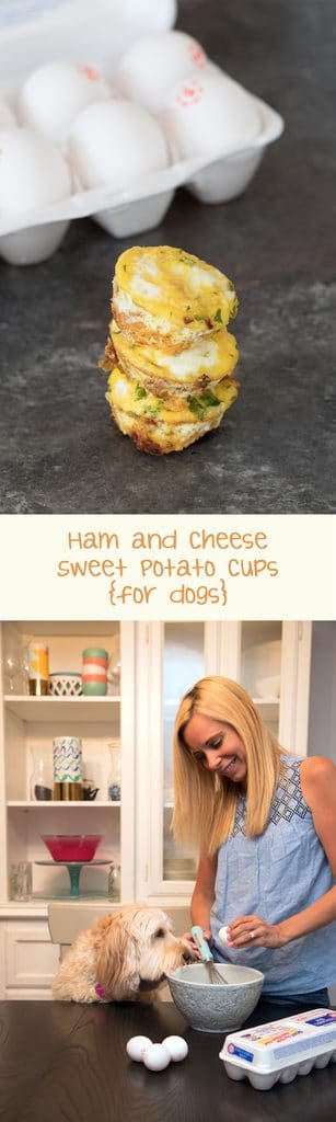 Ham and Cheese Sweet Potato Egg Cups for Dogs -- If you're looking for a fun, dog-friendly snack for your pup, eggs are the way to go! These will have your pup begging for more! | wearenotmartha.com