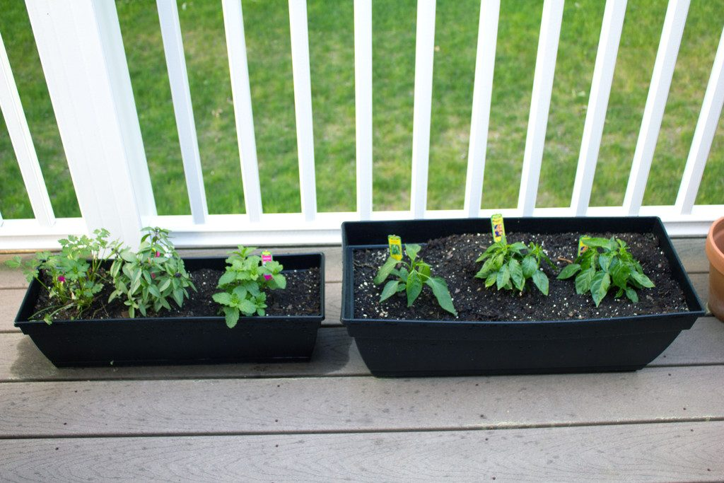 Herb planters sitting in a row on our deck