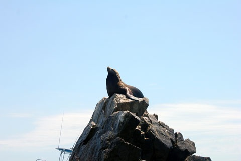 Honeymoon-Los-Cabos-Sea-Lion.jpg
