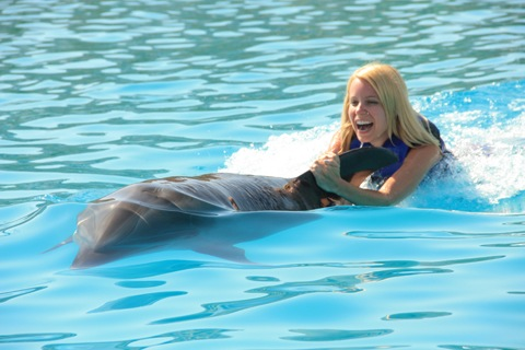 Los-Cabos-Honeymoon-Swim-with-Dolphins-3.jpg