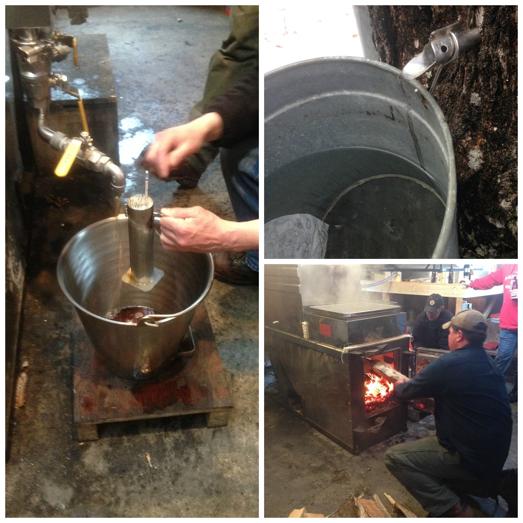 A collage showing the inside of the sugar shack in New Hampshire with maple sap being collected and boiled into maple syrup