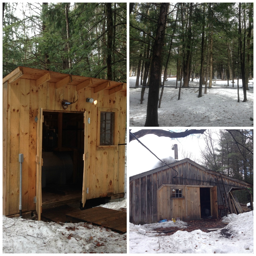 A collage showing the sugar shack in New Hampshire with maple trees and sap being collected