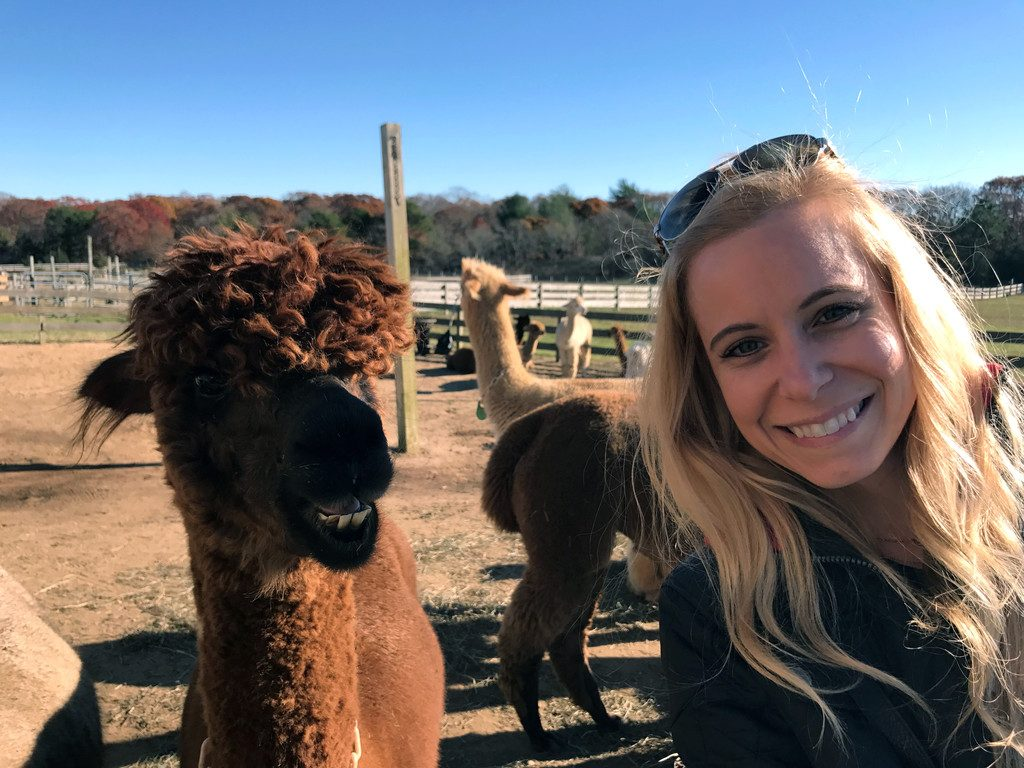 Marthas-Vineyard-Alpacas