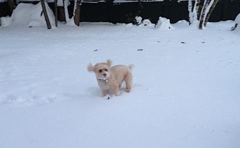 Mitzi Snow 3.jpg