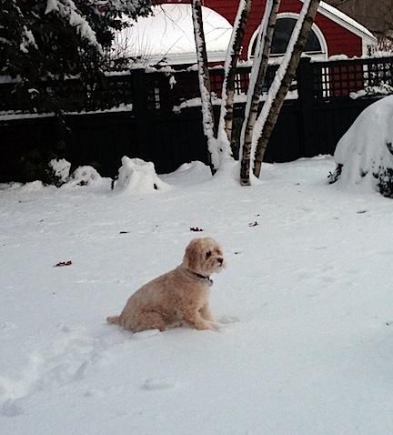 Mitzi Snow.jpg
