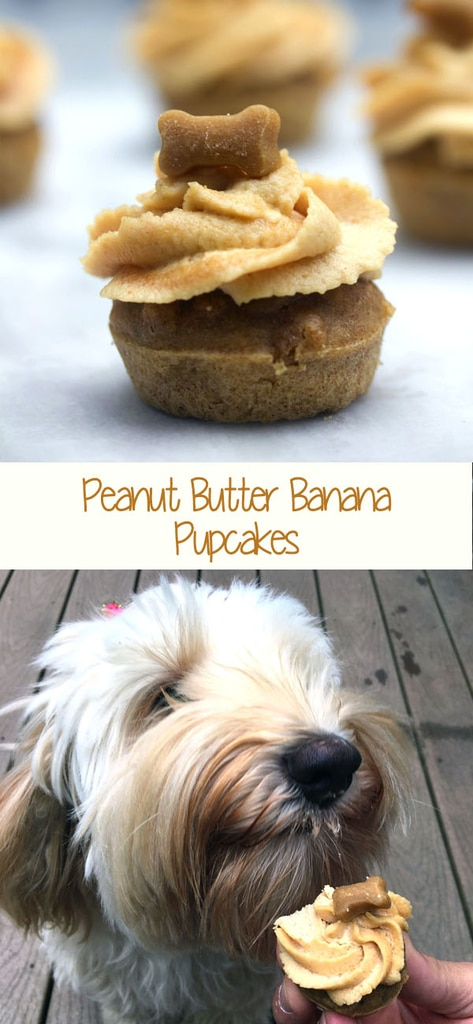 Peanut Butter Banana Pupcakes -- Have a dog who deserves an extra special treat? These pupcakes (cupcakes for dogs!) will have your dog going wild! All of the ingredients are human-grade, so you can enjoy them, too | wearenotmartha.com #pupcakes #dogs #puppy #dogfriendly #cupcakesfordogs