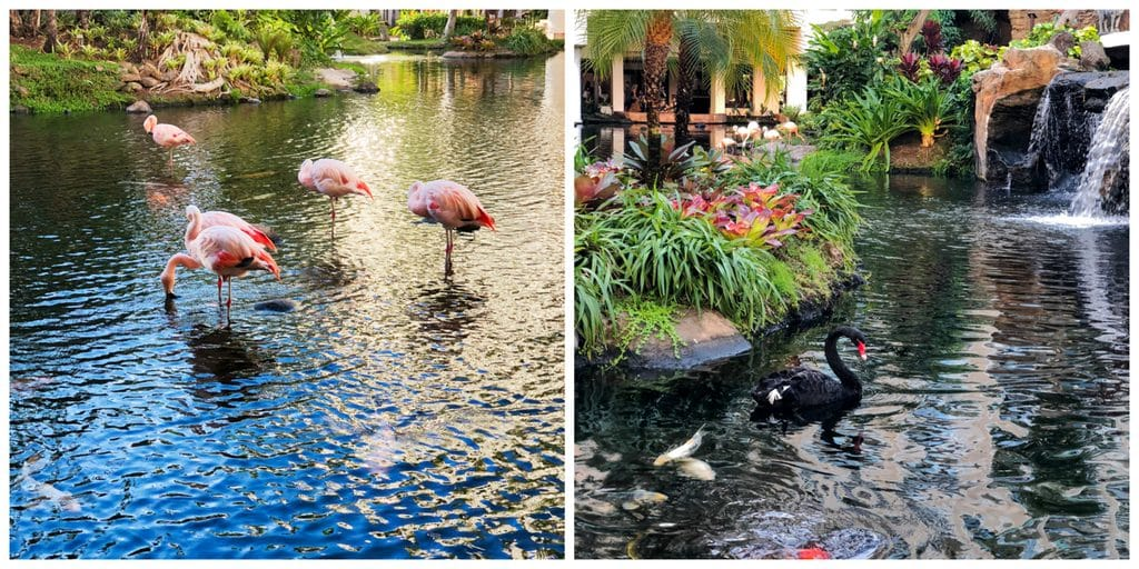 Flamingos and black swan at Chris and Sues in the lobby of the Westin Maui Kaanapali Beach