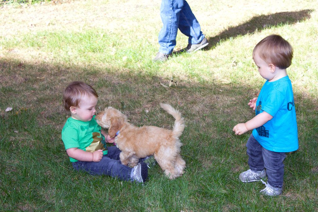 Winnie the Australian Labradoodle Puppy | wearenotmartha.com