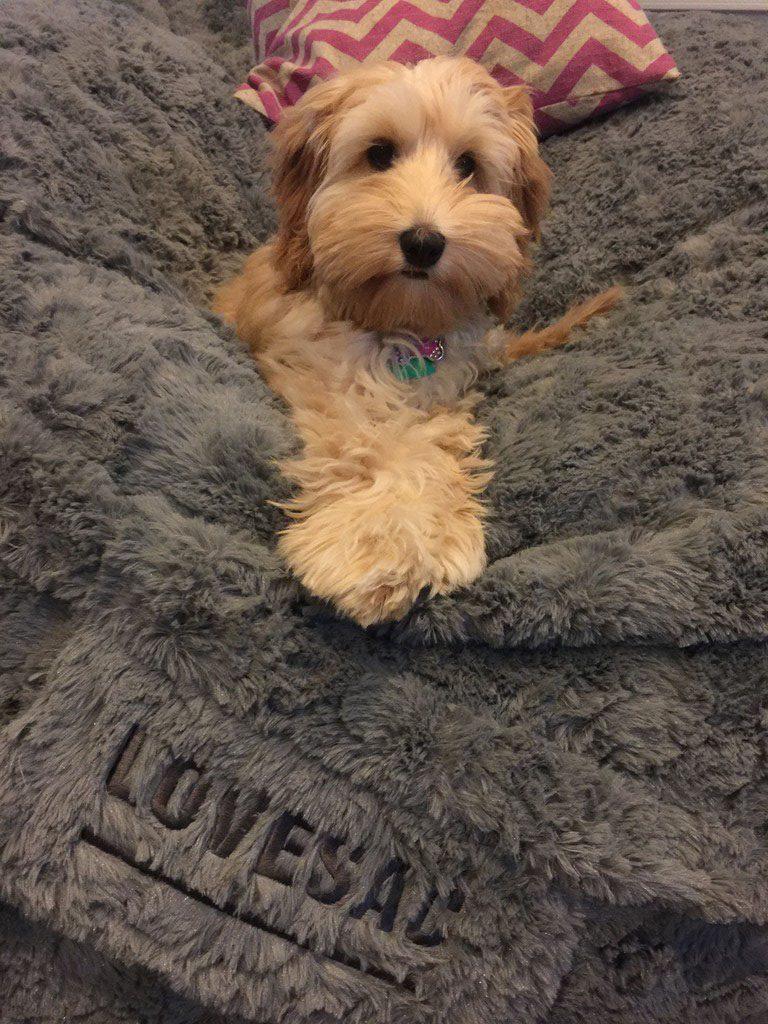 Winnie the Puppy on a Lovesac
