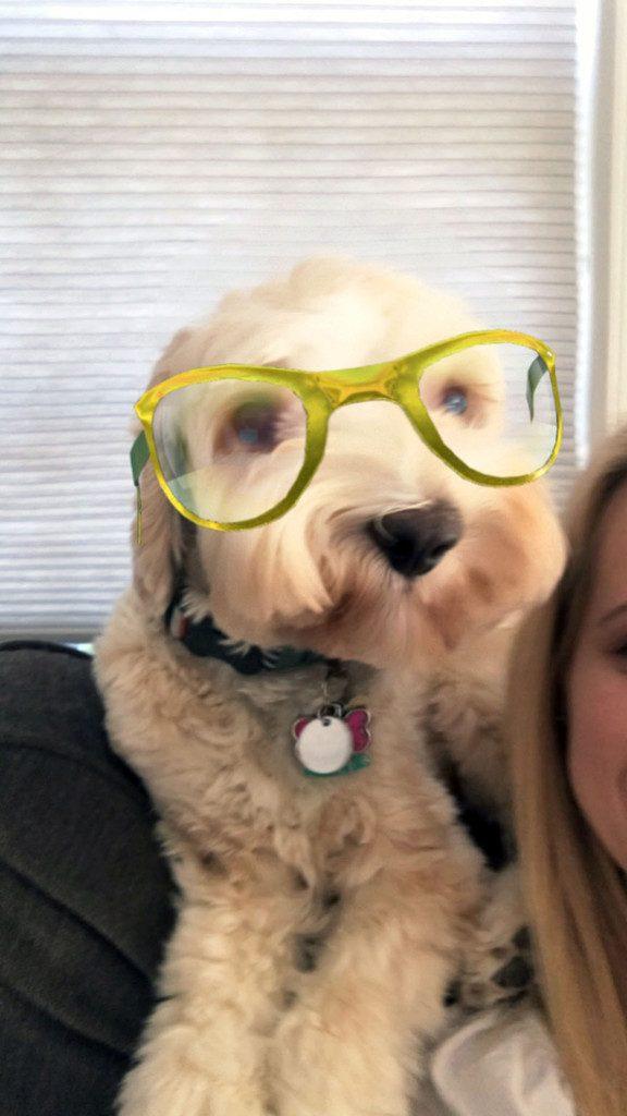 Winnie the Labradoodle Snapchat | wearenotmartha.com
