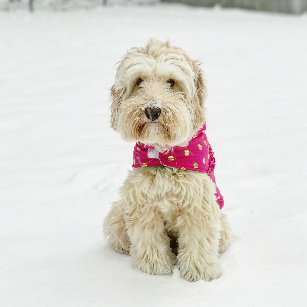 Winnie-Snow