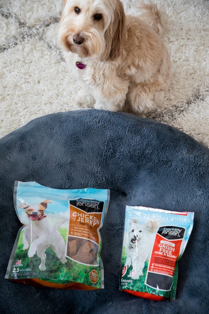 Winnie the mini Labradoodle sitting by her new dog bed looking at her new treats.