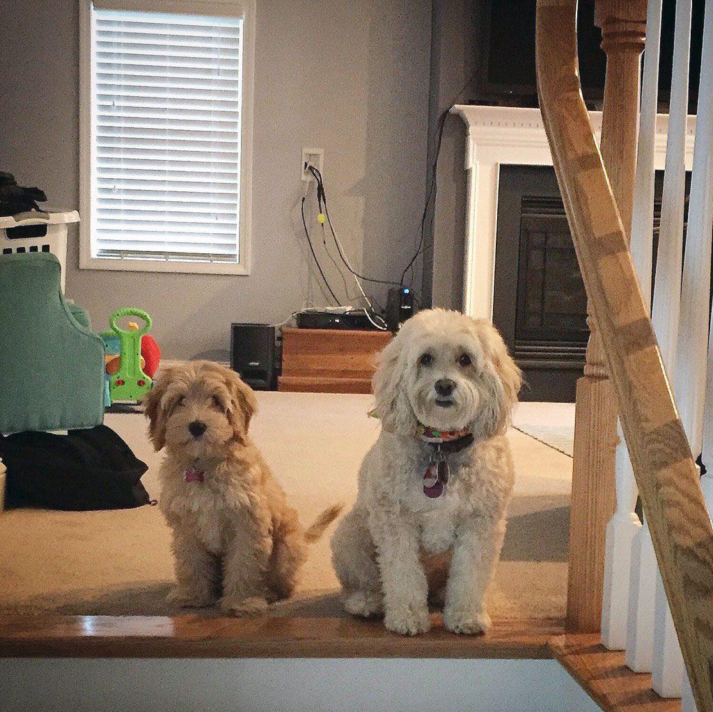 Winnie and Mitzi Puppies
