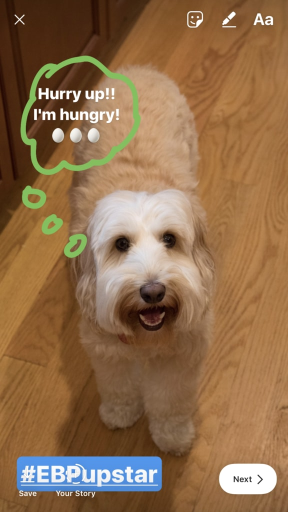 Winnie the labradoodle and Sues Cooking dog-friendly recipes Together | wearenotmartha.com