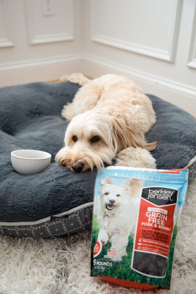 Winnie the mini labradoodle laying down on her dog bed next to her white bowl of oatmeal and a big bag of Pork and Berry Links treats