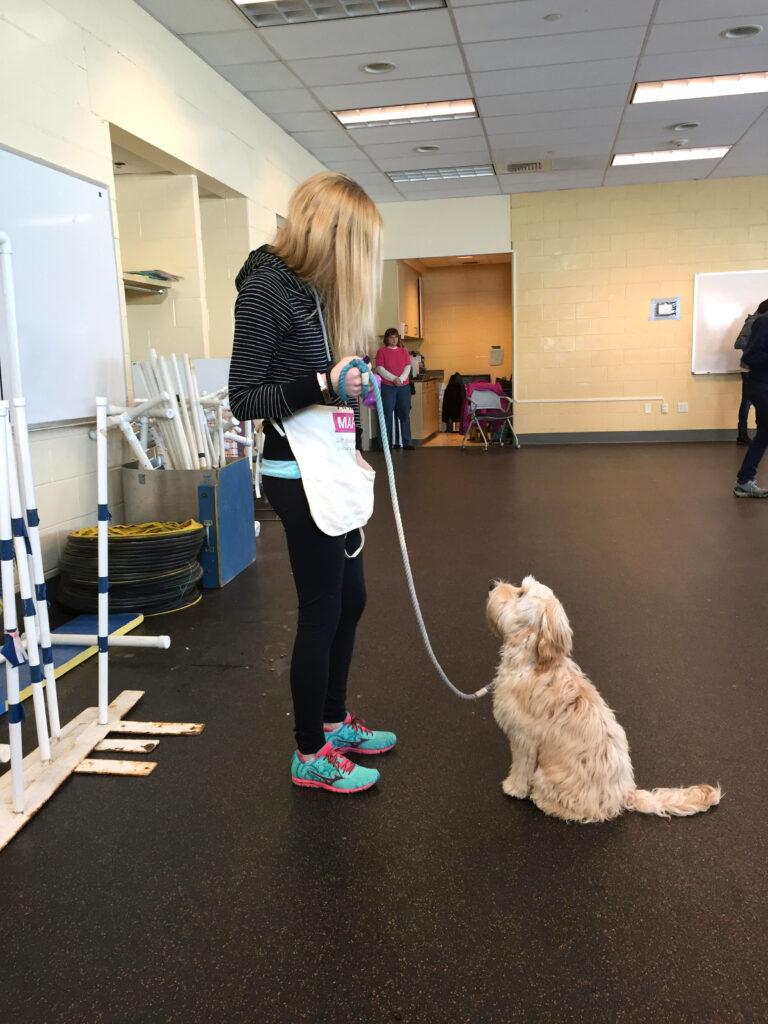 Winnie the Labradoodle Puppy Training | wearenotmartha.com